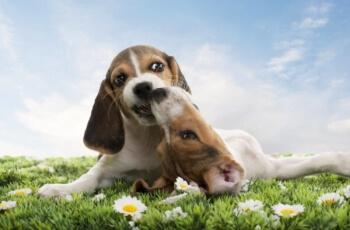 [Questionário] O Quanto Você Sabe Sobre o Comportamento Canino?