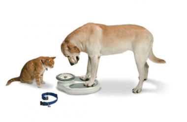 Como identificar e prevenir a obesidade canina