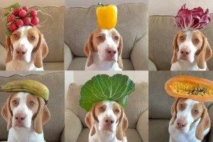 Frutas para Cachorro 1