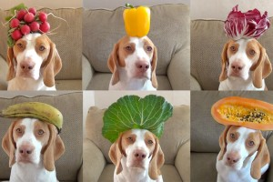 Frutas para Cachorro