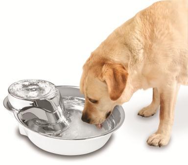 Por que é importante manter a tigela do seu cachorro sempre limpa? 5