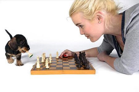 cachorro salsicha e uma mulher jogando xadrez