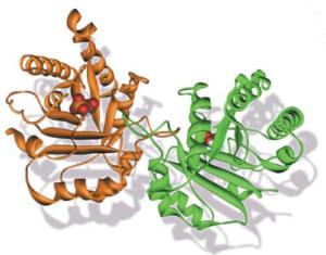 A importância das enzimas e sua relação com a alimentação natural 1