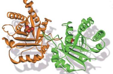 A importância das enzimas e sua relação com a alimentação natural