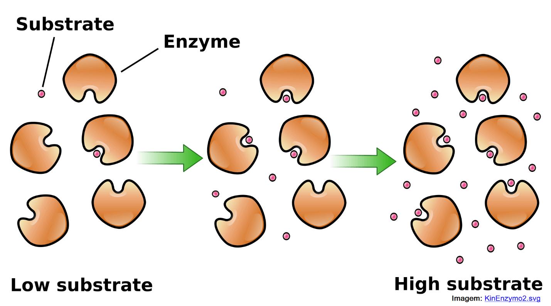 Enzima e substrato