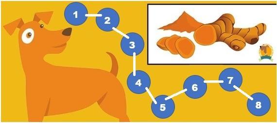8 Benefícios do Golden Milk para Cães 2
