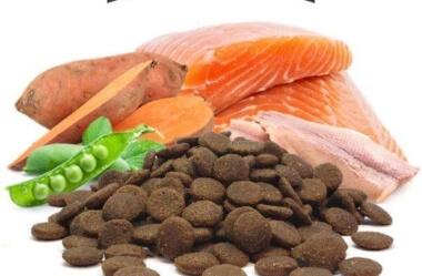 Ração sem grãos: será ela a solução para os problemas de pele e alergia do seu cão?